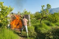 Spreco bruciante della potatura Fotografia Stock Libera da Diritti
