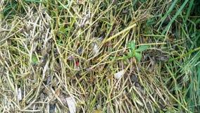 Spreco di plastica dalla grondaia fare il flusso di acqua ostruito fotografie stock