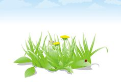 Spreen grass green flower vector Royalty Free Stock Image