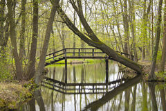 Spreewald, Mooi Landschap in Duitsland Stock Afbeelding