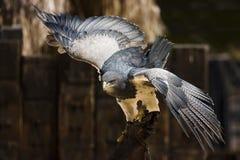 Spreid uw vleugels uit royalty-vrije stock foto's