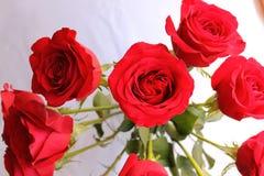 Sprej av rosor Arkivbild