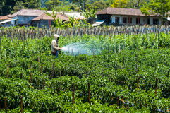 Sprejande bekämpningsmedel för bonde på hans fält Arkivfoto