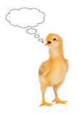 Sprekend een gele kip Stock Afbeeldingen
