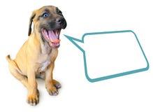 Sprekend puppy dat op witte achtergrond wordt geïsoleerde Royalty-vrije Stock Afbeeldingen