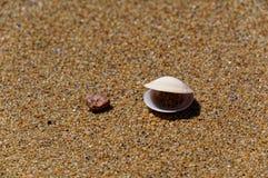 Sprekende tweekleppige op het strand royalty-vrije stock afbeeldingen