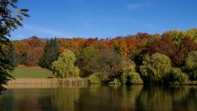 Spremberg le lac de cygne en automne banque de vidéos