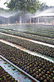 Sprenger, die Baumschulengarten wässern stockfotos