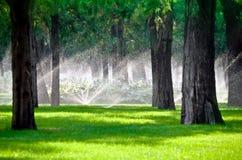 Sprenger in einem Rasen mit Baum Stockbilder