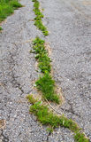 Spricka i asfalt Royaltyfria Bilder