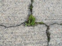 Spricka, i att erodera betong med ogräs som växer i sprickor royaltyfri fotografi