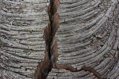 Spricka i en basaltisk ropy lava Fotografering för Bildbyråer