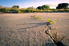 Spricka i torr sandyttersida, ogräs, härligt ljus arkivfoto