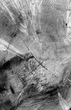 Spricka i träd Arkivfoton
