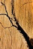 Spricka i trädet arkivfoton