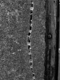 Spricka i väggen med spindlar fotografering för bildbyråer