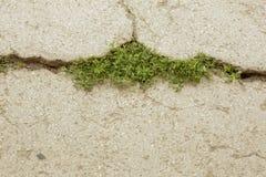 Spricka på asfalten med gräs Arkivfoton