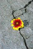 Spricka på asfaltvägen En spricka i asfalten och en härlig blomma Kopieringsutrymmen royaltyfri foto