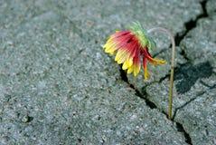 Spricka på asfaltvägen En spricka i asfalten och en härlig blomma Kopieringsutrymmen royaltyfria bilder