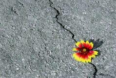 Spricka på asfaltvägen En spricka i asfalten och en härlig blomma Kopieringsutrymmen fotografering för bildbyråer