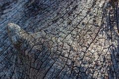 Sprickor och modell av trä Arkivfoto