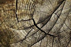 Sprickor på den gamla stubben Arkivfoto