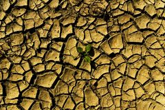 sprickor torkar växtsoill Royaltyfria Bilder