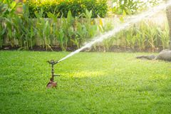 Spridare som bevattnar gräs i trädgård under solljus Gräsmattaspridare i handling arkivbilder