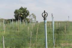 Spridaren som bevattnar växterna Fotografering för Bildbyråer