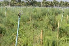 Spridaren som bevattnar växterna Arkivfoto