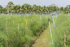 Spridaren som bevattnar växterna Royaltyfri Foto