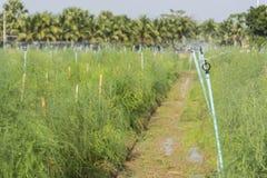 Spridaren som bevattnar växterna Arkivbild