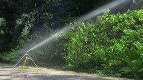 Spridaren som bevattnar växterna parkerar in stock video