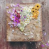 Spridd collage av blommor arkivbilder
