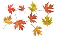 Spridda Autumn Leaves Background Royaltyfria Foton