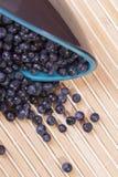 spridda blåbär Royaltyfri Bild