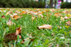 Spridda bruna höstsidor på grönt gräs Royaltyfria Bilder