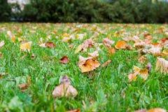Spridda bruna höstsidor på grönt gräs Arkivfoton