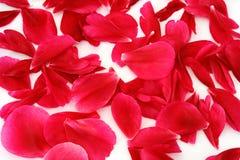 spridda petals Royaltyfria Bilder