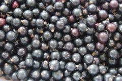 Spridning av den svarta vinbäret som texturen Fotografering för Bildbyråer
