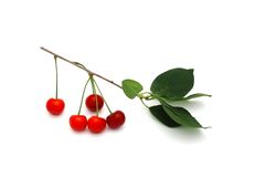 Sprig вишни с ягодами на белой предпосылке Стоковая Фотография