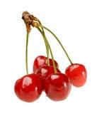 sprig вишни 5 Стоковое Фото