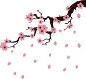 Sprig вишни Стоковые Фото