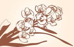 Sprig орхидеи иллюстрация штока