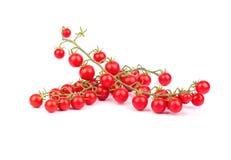 Sprig томатов вишни Стоковые Изображения RF