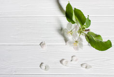A sprig of apple blossom on a wooden surface. Stock Image
