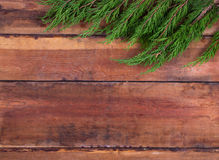 Sprig arborvitae on the boards Royalty Free Stock Image