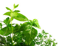 Sprig of aromatic herbs Stock Image
