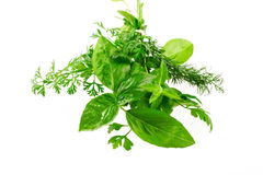 Sprig of aromatic herbs. Close up image of an  aromatic herbs on white Royalty Free Stock Image
