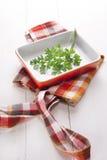 Sprig av parsley Royaltyfri Bild